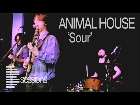 Animal House - 'Sour': Band From Brighton - Live Music Session (Bsession)