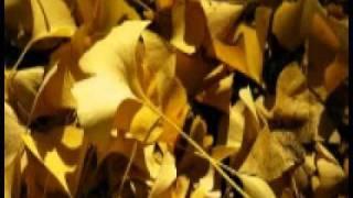 Baazigar sad song (mujhko galat na samajna - Kumar sanu).wmv