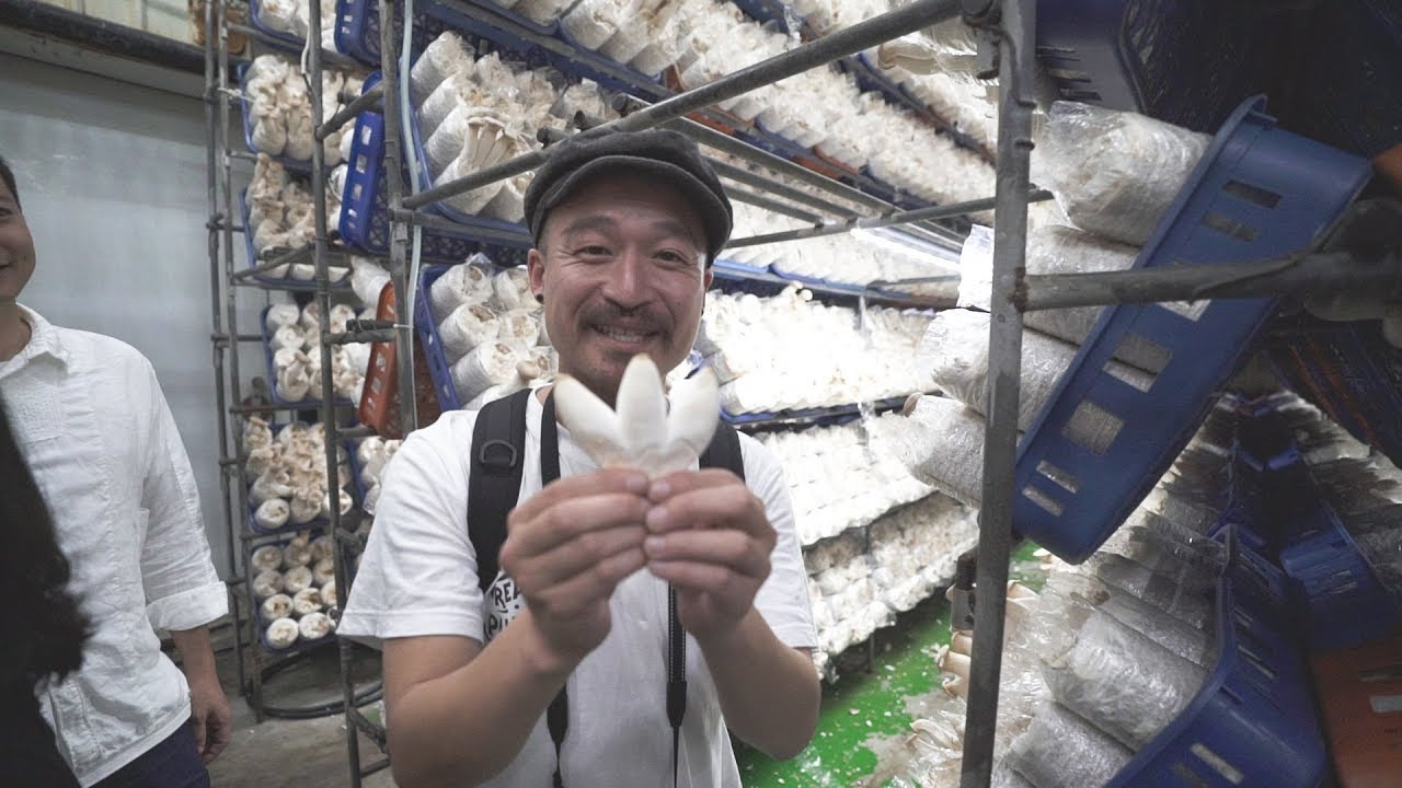 [沖縄台湾#5] King Oyster Mushroom Factory & Night Market in Taipei // エリンギ工場と台北の夜市