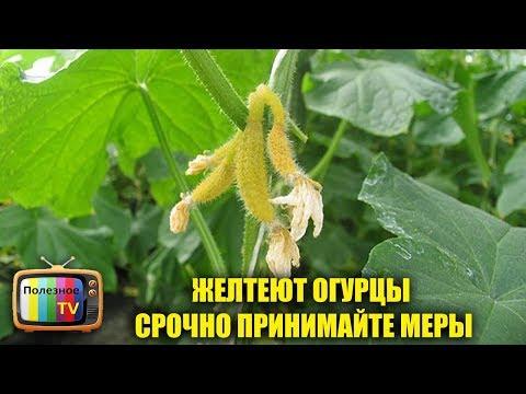 Вопрос: Что за насекомые стали появляться дома ( см. Фото)?