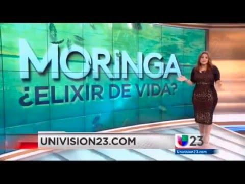 Moringa Colombia Wsp 3155902899 Reportaje de Univisión