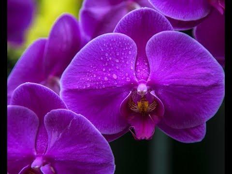 Изменения с орхидеями после удобрения в палочках,и были ли эти изменения вооообще!!!