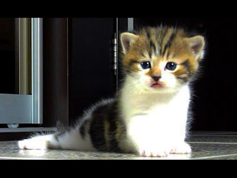 A lot of Cute Kittens And Funny Kittens Videos Compilation