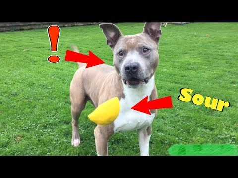 Dog Eats Sour Warhead