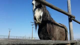 ДЖОКЕР судьба одного коня