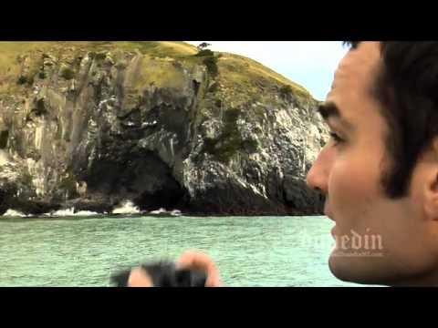 Wildlife on the Otago Peninsula in Dunedin