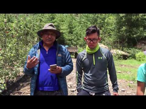 HIGH DENSITY APPLE FARM IN BHRATANG, MANANG