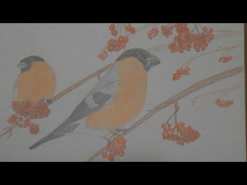 Снегири. Рисунок цветными карандашами. Bullfinches. Drawing with colored pencils.