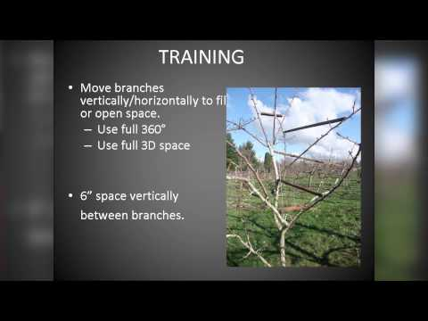 OSU Master Gardener: Pruning Fruit Trees