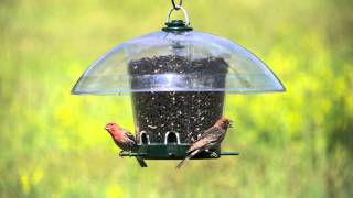 K-feeders® Carousel Wild Bird Feeder