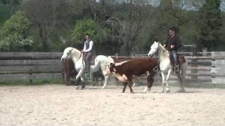 Camargue Opus du Mas bétail