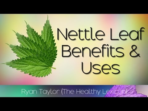 Nettle Leaf: Benefits and Uses