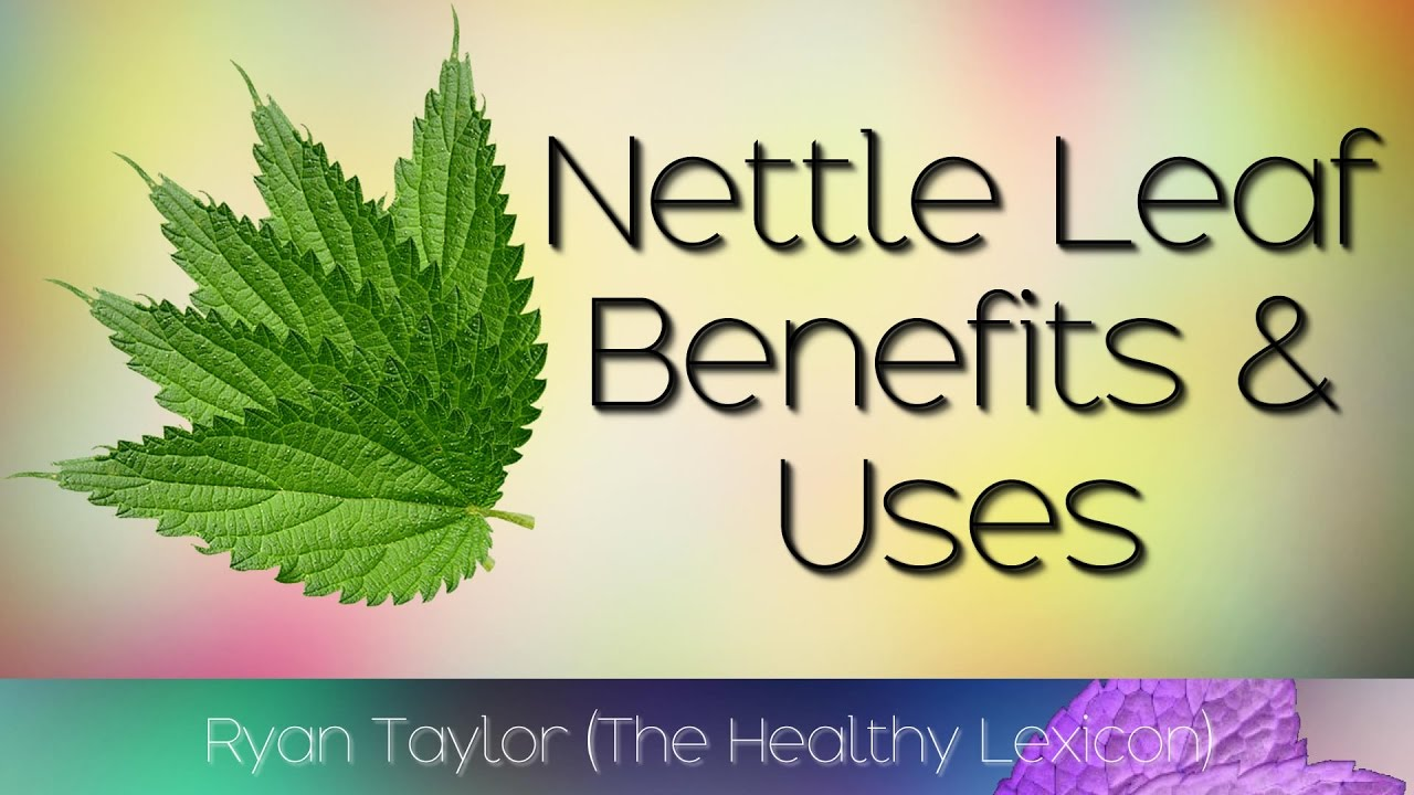 Nettle Leaf Benefits And Uses Youtube