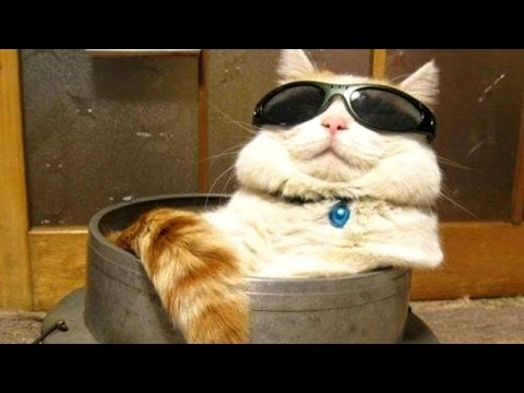 Wanna laugh? Get a cat! - Funny and cute cat compilation