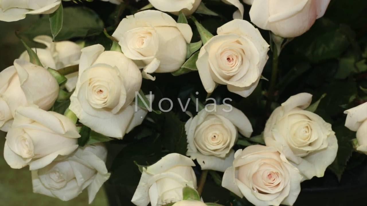 Significado De Las Rosas Según Su Color Youtube