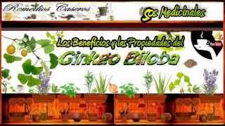 Ginkgo Biloba - Remedios para Mejorar la Circulación la Memoria y la Concentración Mental
