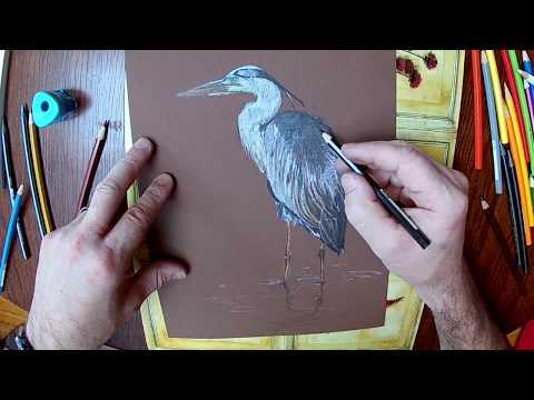 Rysowanie czapli siwej / Drawing a grey heron with crayons