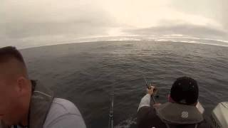 Pov Albacore Tuna Fishing