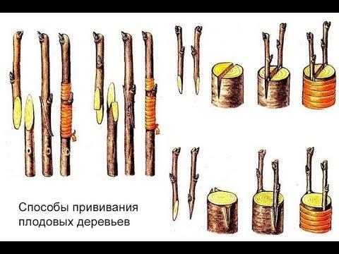 Прививка плодовых. ч.2. Виды и применение
