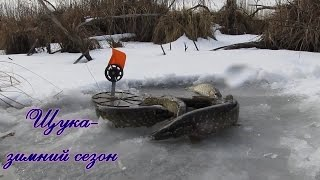 Ловля щуки зимой, щука на жерлицы  видео отчот 2015  Pike fishing winte