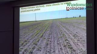 Regionalne uwarunkowania uprawy zbóż ozimych i rzepaku