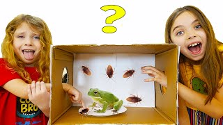 Cutiile Misterioase pline cu Surprize   Mysterious Challenge in the House