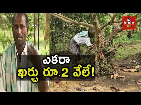 Organic Fruits Farming | Natural Farming | hmtv Agri