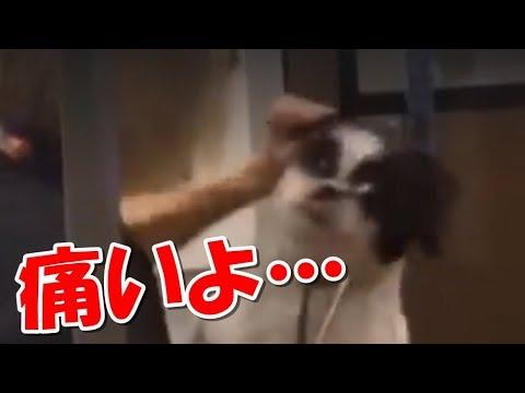 犬に暴行を加える恐怖のトリマー!虐待動画がきっかけで解雇される