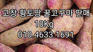 고창 황토땅 꿀고구마판매 최상급10Kg.한정판매 50박…
