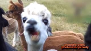 Приколы  Приколы про животных  Funny animals