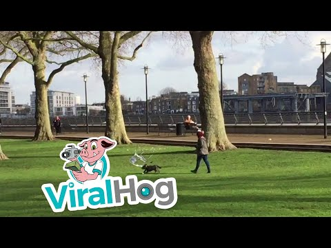 Thumbnail: Chair Chases Dog Through Park