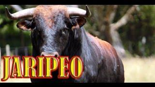 """JARIPEO EN IHUATZIO """"10 Abril 2015 """""""