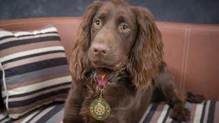 Video Arthur - Cocker Spaniel - 4 Weeks Residential Dog Training download MP3, 3GP, MP4, WEBM, AVI, FLV Desember 2017