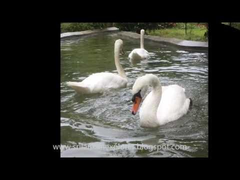 Dehiwala Zoological Gardens
