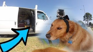 I put a GoPro on my dog and YOU WON'T BELIEVE WHAT HE FOUND!