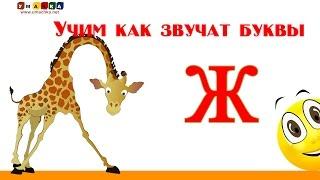 Алфавит русский Учим Буквы и Звуки с Кругляшиком - Буква Ж