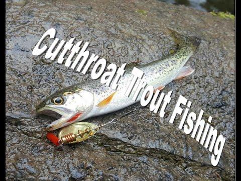 Backwoods Cutthroat Trout Fishing (Western Washington Outdoors episode 2)