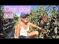 Life on a tomato farm in Australia   A true backpacker job