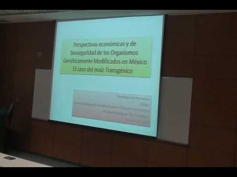 Transgenic maize in Mexico 1 of 8.avi
