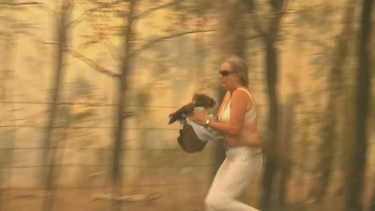 ไฟไหม้ ออสเตรียเลีย Ohne Shirt in die Flammen: Retterin trifft Koala Lewis wieder