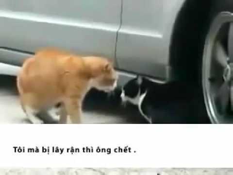 2 con mèo tâm sự _)) - { Pháp sư }.flv