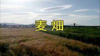 昔懐かし、オヨネーズの「麦畑」(1989年8月)を 歌ともの冬馬さんとコ...