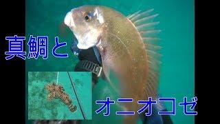 新潟遠征第3弾。 最終日に真鯛を追加したはいいものの、最後の最後にオ...
