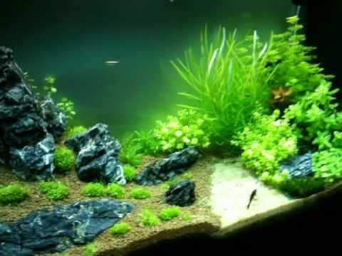Il mio acquario tropicale dolce 125 lt 3 settimana for Acquario 120 litri