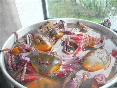 Cocinar Cangrejos De Mar | Como Preparar Cangrejos Youtube