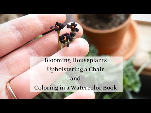 Blooming Houseplant Tour And Finishing Up My Chair | Winter Houseplant Vlog Part 2