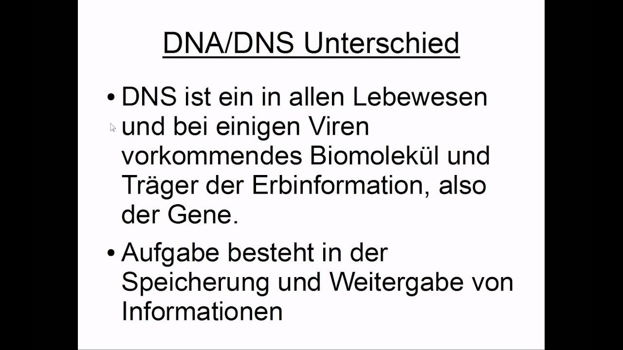 DNA DNS Unterschied YouTube ~ 07084327_Unterschied Zwischen Xerophyten Und Sukkulenten