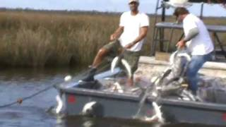 FISHING FOR ROE MULLET WITH GILL NET IN NORTH CAROLINA 2011