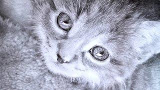 Как нарисовать кошку карандашом.(Как нарисовать кошку поэтапно. Рисунок карандашом. Ускоренное видео, но может использоваться в качестве..., 2015-08-27T13:15:52.000Z)