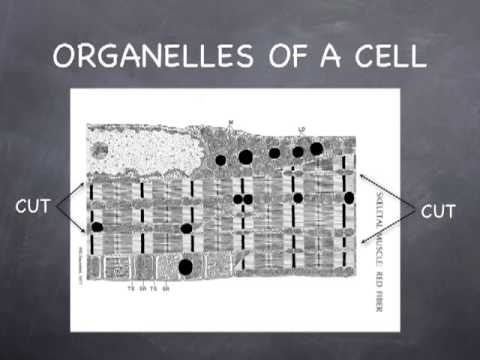 Lecture 2.2   - Cell Membrane and Nucleus